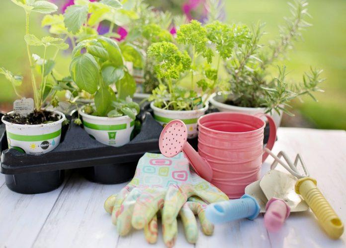Surprising Benefits of Gardening