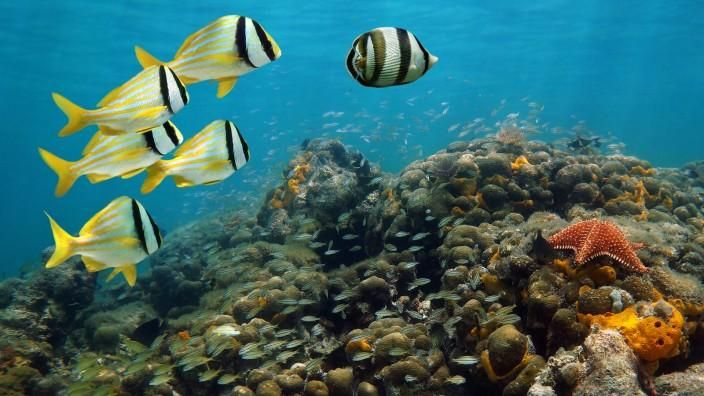 Interesting Facts About World Oceans Day