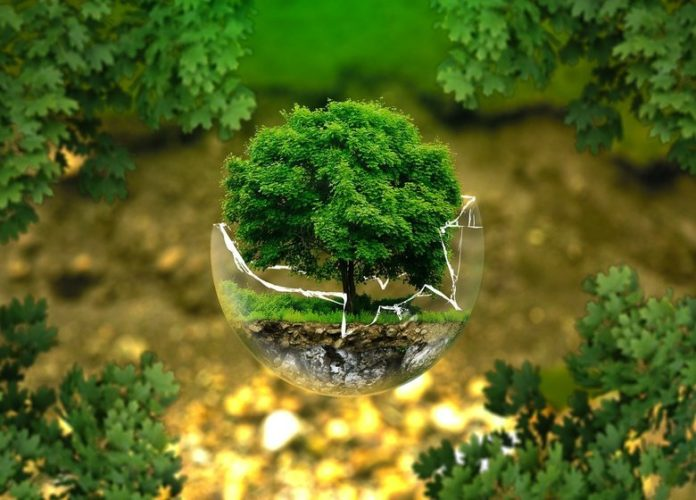 History And Facts About World Environment Day