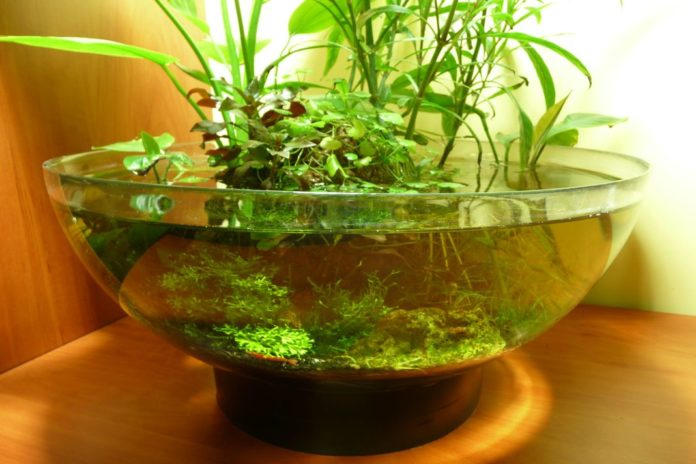Look Inside For The Tips To Make An Indoor Water Garden