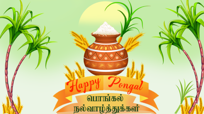 Why is Pongal Festival celebrated?